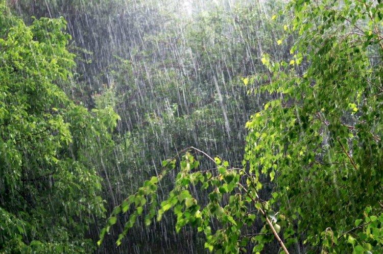 Сильный дождь ожидается в Алматинской области
