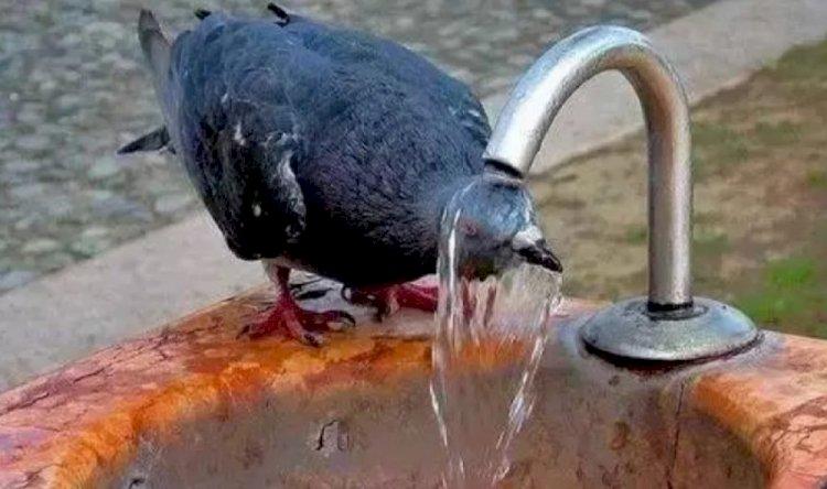 Жара до 46 градусов ожидается в Казахстане