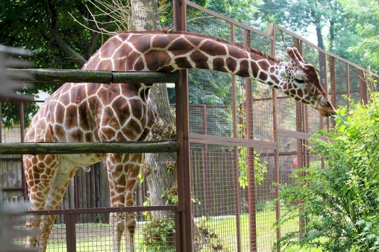 Алматинский зоопарк меняет график работы