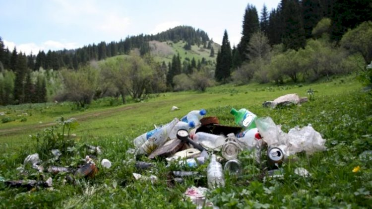 Алматинку оштрафовали за выброшенный на природе мусор