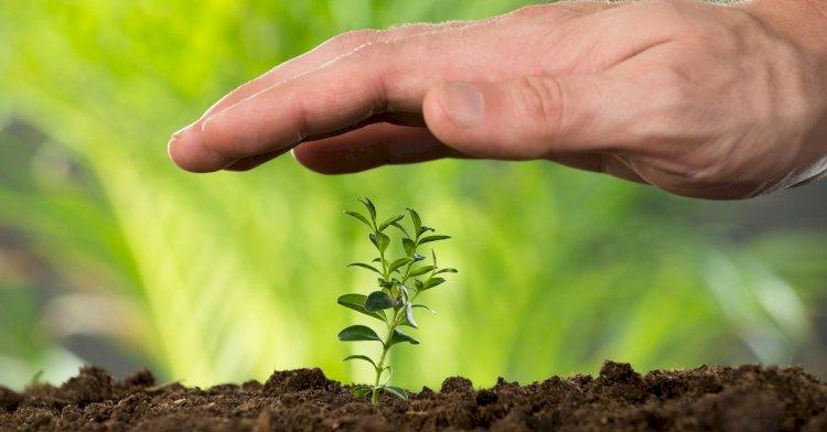 В РК тестируют новые биопрепараты для адаптации посевов к засухе