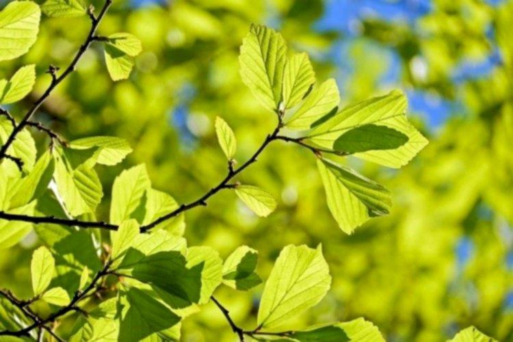 В Жетысуском районе Алматы высадили более 8 600 молодых деревьев