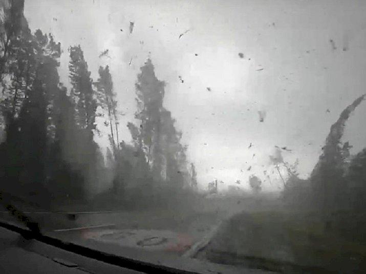 Мощный ураган в Беларуси, поваливший десятки деревьев, попал на видео