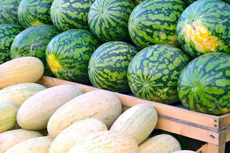 Казахстан стал основным импортером узбекских дынь и арбузов