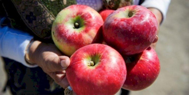 Алматинские активисты запустили проект по возрождению яблонь