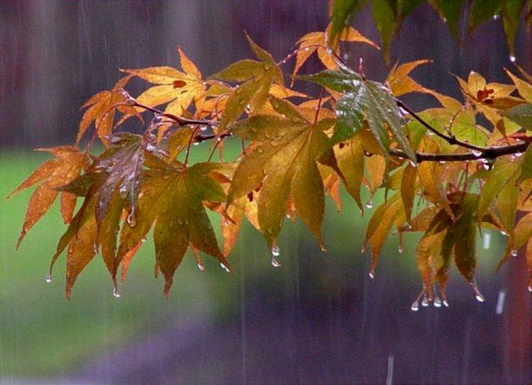 Дожди и похолодание ожидаются в Казахстане