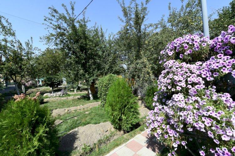 Как алматинцы озеленяют дворы
