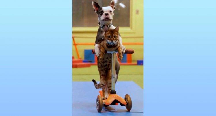Езда кошки с собакой на самокате попала в Книгу рекордов Гиннесса – видео