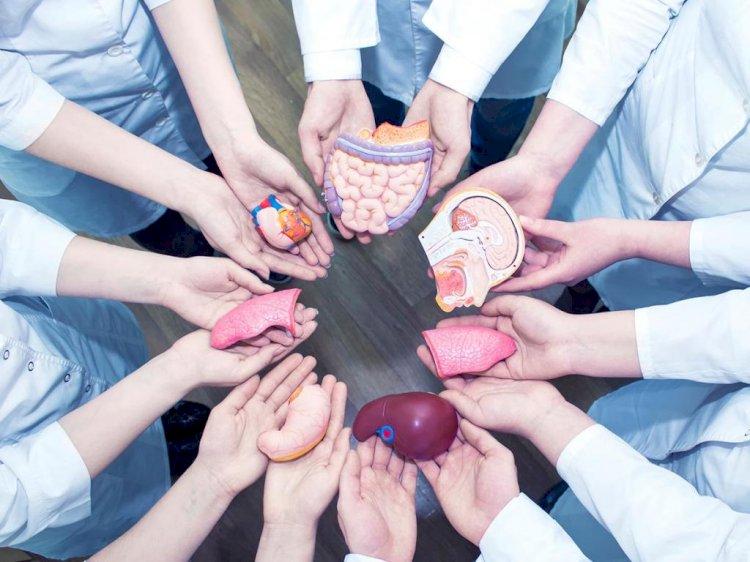 Узбекистан готов принять закон о трансплантации человеческих органов