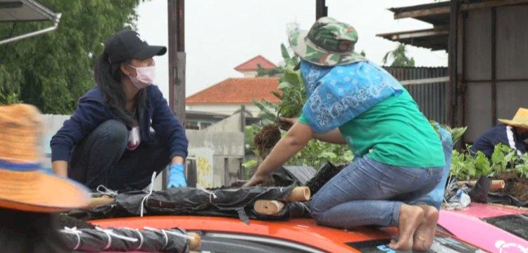 Коронавирус вынудил тайских таксистов превратить крыши машин в огороды