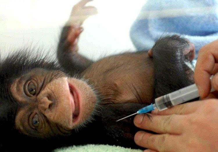 Прививать животных от коронавируса начали в США