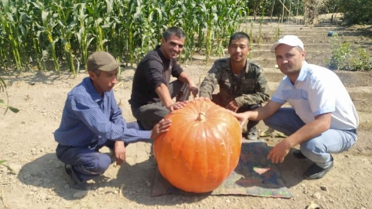 В Узбекистане вырастили тыкву весом более 70 килограмм